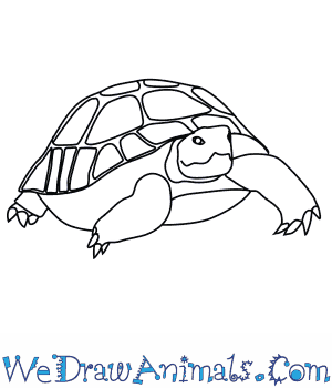 How To Draw A Desert Tortoise