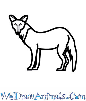 How to Draw a Dhole in 6 Easy Steps