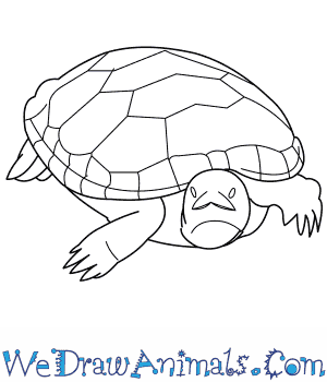 How to Draw a Diamondback Terrapin in 8 Easy Steps