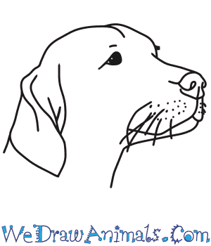 How to Draw a Dog Head in 4 Easy Steps