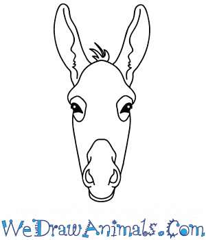 How to Draw a Donkey Face in 11 Easy Steps