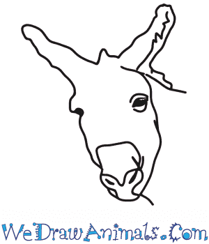How to Draw a Donkey Head in 6 Easy Steps