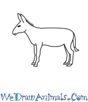 How to Draw a Donkey in 9 Easy Steps