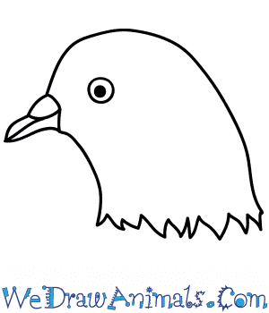 How to Draw a Dove Face in 10 Easy Steps