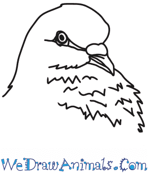How to Draw a Dove Head in 6 Easy Steps