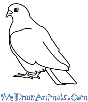 How to Draw a Dove in 6 Easy Steps