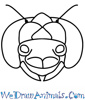 How to Draw a Dragonfly Face in 9 Easy Steps