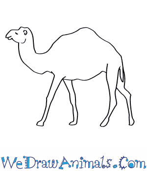 How to Draw a Dromedary Camel in 7 Easy Steps