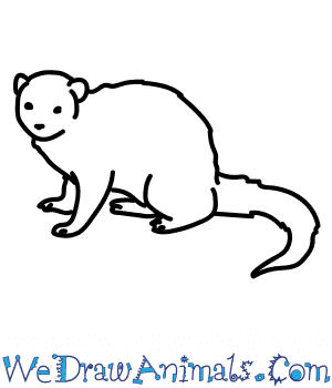 How to Draw a Dwarf Mongoose in 6 Easy Steps