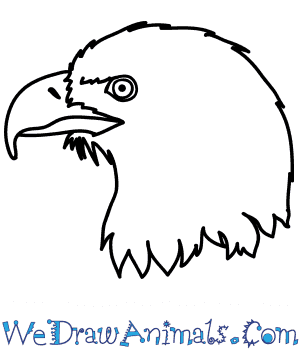 How to Draw an Eagle Face in 10 Easy Steps
