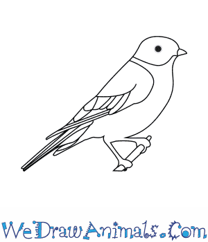 how to draw an eastern bluebird