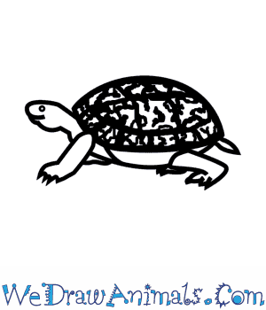 How to Draw an Eastern Box Turtle in 7 Easy Steps