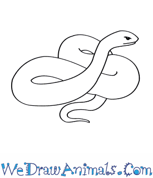 How to Draw an Eastern Indigo Snake in 5 Easy Steps