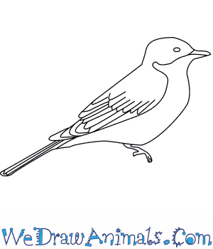 How to Draw an Eastern Kingbird in 6 Easy Steps