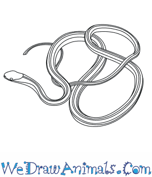 How to Draw an Eastern Ribbon Snake in 5 Easy Steps