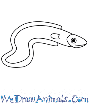 How to Draw an Eel For Kids in 5 Easy Steps