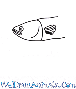 How to Draw an Eel Head in 6 Easy Steps