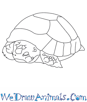 How to Draw an Egyptian Tortoise in 6 Easy Steps