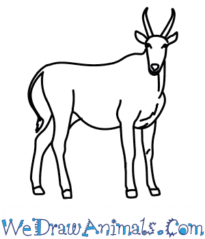How to Draw an Eland in 8 Easy Steps