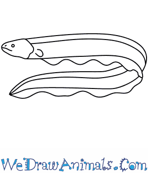 How to Draw an Electric Eel Draw Electric on