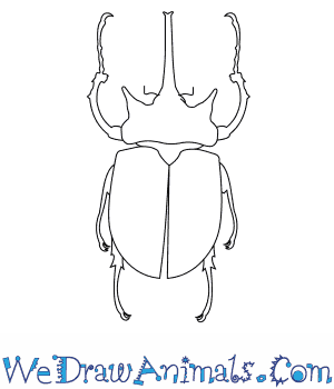 How to Draw an Elephant Beetle in 6 Easy Steps