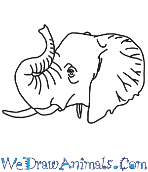 How to Draw an Elephant Head in 7 Easy Steps
