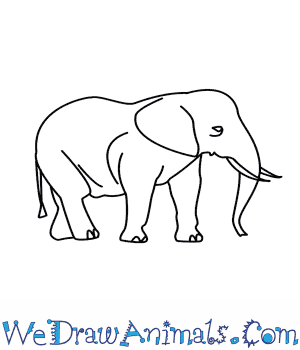 How to Draw an Elephant in 7 Easy Steps