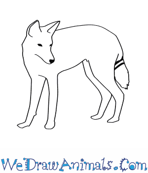 How to Draw an Ethiopian Wolf in 8 Easy Steps