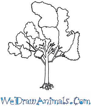 How to Draw an Eucalyptus Tree in 5 Easy Steps