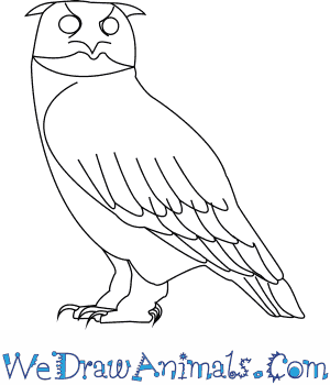 How to Draw a Eurasian Eagle Owl in 7 Easy Steps