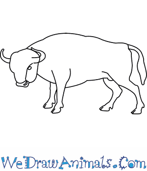 How to Draw a European Bison in 6 Easy Steps