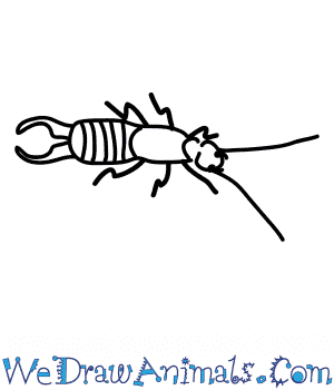 How to Draw a European Earwig in 6 Easy Steps