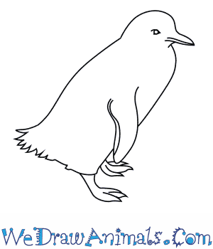 How to Draw a Fairy Penguin in 7 Easy Steps