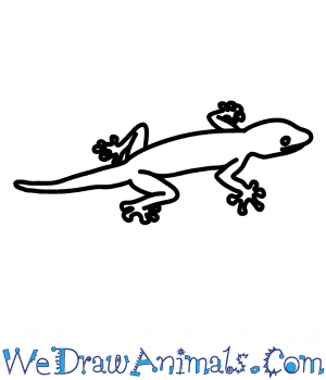 How to Draw a Fan Footed Gecko in 7 Easy Steps