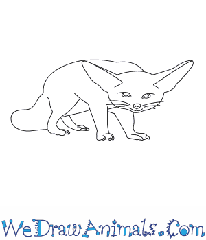 How to Draw a Fennec Fox in 12 Easy Steps