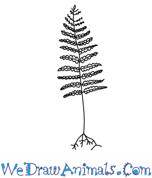 How to Draw a Fern Tree in 3 Easy Steps