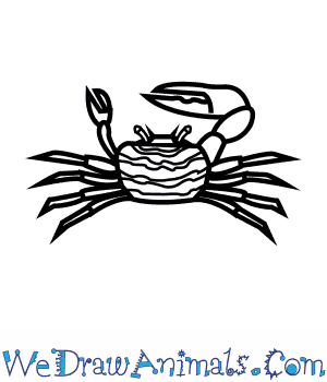 How to Draw a Fiddler Crab in 7 Easy Steps