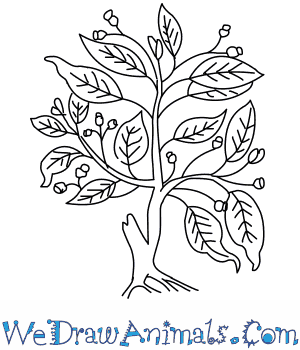 How to Draw a Fig Tree in 5 Easy Steps