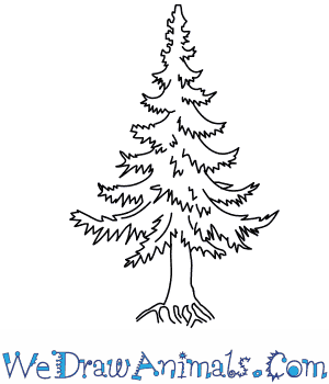 how to draw a fir tree