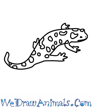 How to Draw a Fire Salamander in 6 Easy Steps