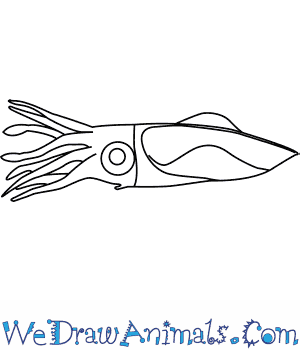 How to Draw a Firefly Squid in 5 Easy Steps