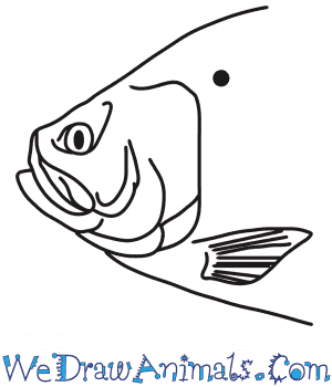 How to Draw a Fish Head in 6 Easy Steps