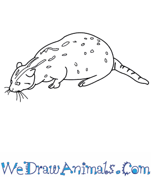 How to Draw a Fishing Cat in 9 Easy Steps
