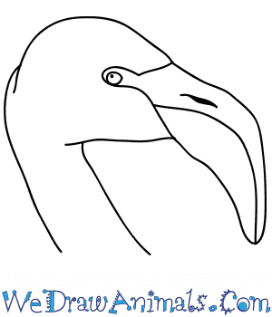 How to Draw a Flamingo Face in 7 Easy Steps