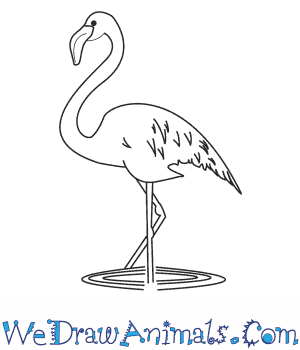 How to Draw a Flamingo in 8 Easy Steps
