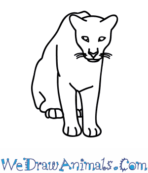 How to Draw a Florida Panther in 7 Easy Steps