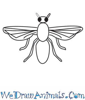 How to Draw a FlyWe Draw Animals