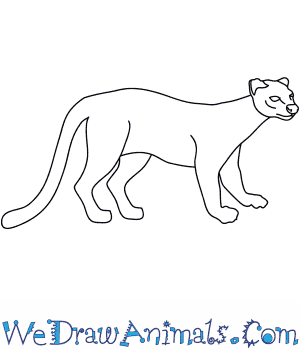 How to Draw a Fossa in 8 Easy Steps