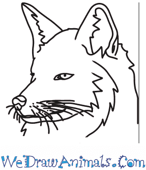How to Draw a Fox Head in 7 Easy Steps
