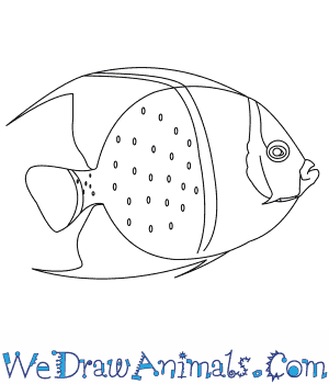 How to Draw a French Angelfish in 6 Easy Steps